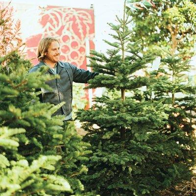 christmas-trees-1208