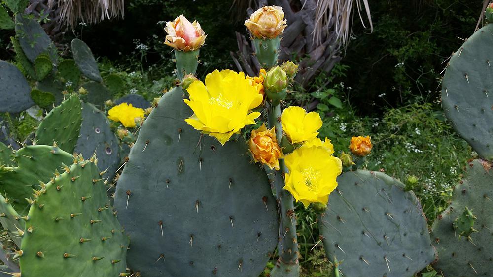 San Antonio, TX Botanical Garden